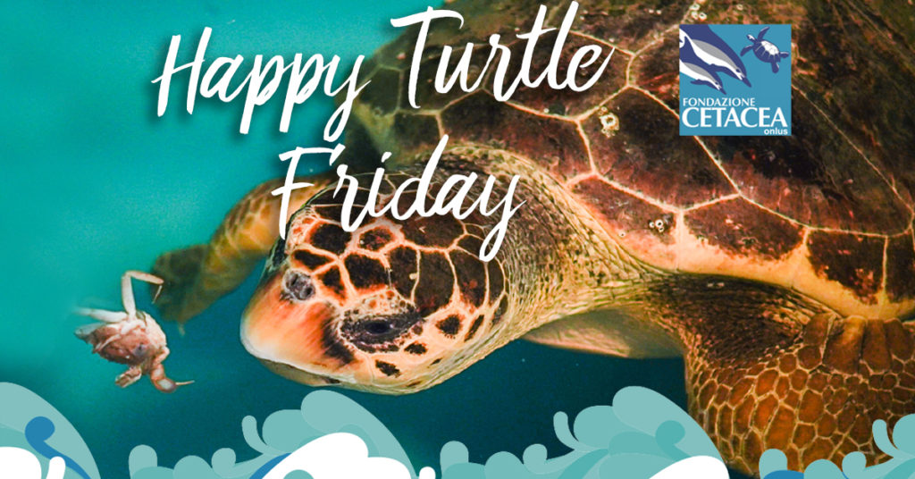 Happy Turtle Friday il black friday di Officina Naturae