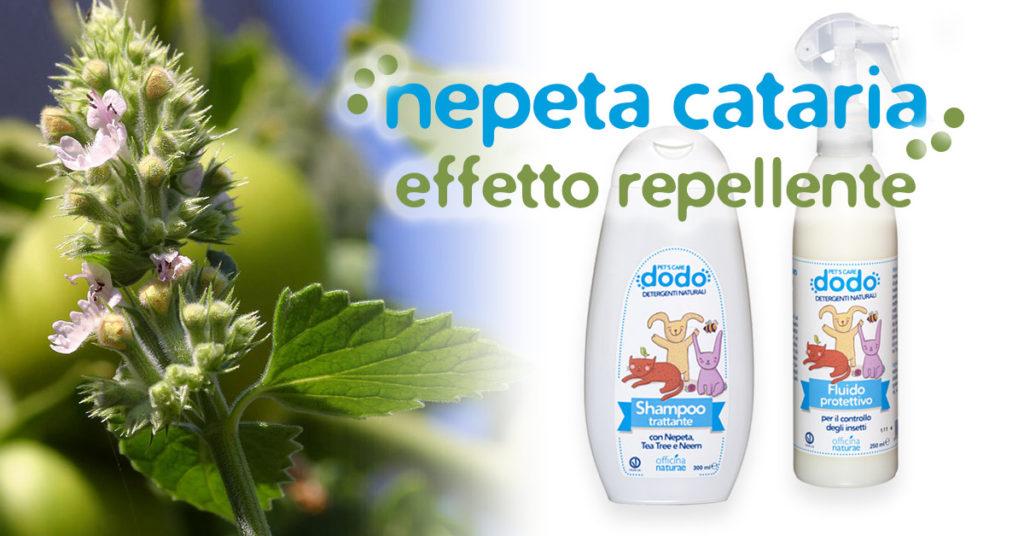 La Nepeta Cataria ingrediente di Dodo Pet's Care